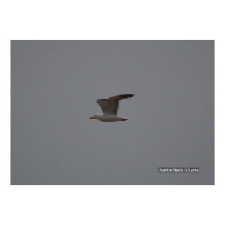 Seagull Wings Poster
