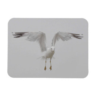 Seagull with Perpendicular Wings Magnet