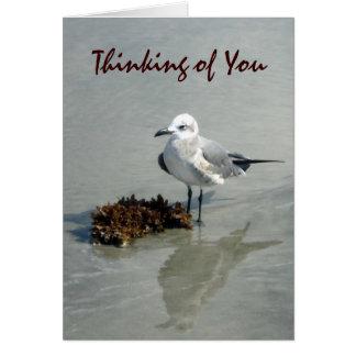 Seagull with Seaweed Custom Cards