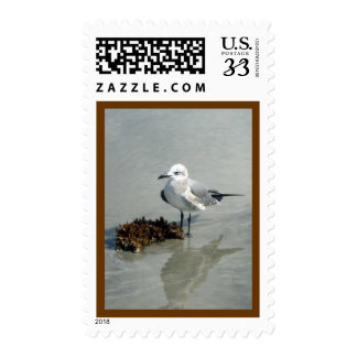 Seagull with Seaweed Stamps