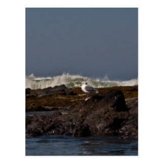 Seagulls and Surf Postcards