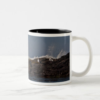 Seagulls and Surf Two-Tone Coffee Mug