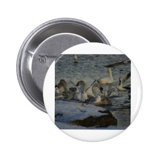Seagulls and Swans winter feed Pinback Button