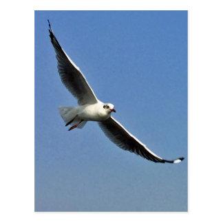 Seagulls are beautiful birds postcard