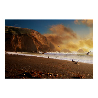 Seagulls at Sunset Poster Posters