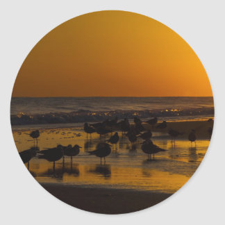 Seagulls At Sunset Classic Round Sticker