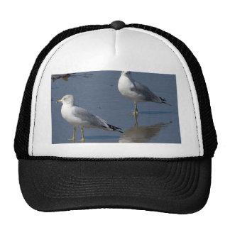 Seagulls At The Ocean Near Ocean Beach In San Dieg Trucker Hat