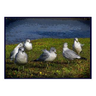 Seagulls ATC Large Business Card