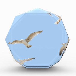 Seagulls Award