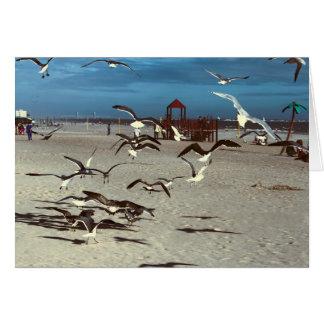 Seagulls Birds on Coney Island Beach Photo Greeting Card