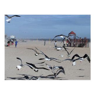 Seagulls Birds on Coney Island Beach Photo Postcard
