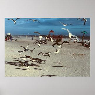 Seagulls Birds on Coney Island Beach Photo Posters