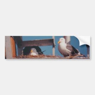 Seagulls Bumper Sticker Car Bumper Sticker