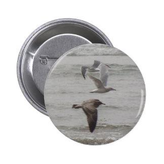 Seagulls Button