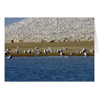 Seagulls Stationery Note Card