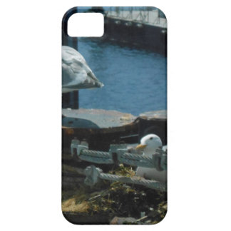Seagulls iPhone 5 Cover