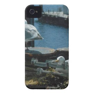 Seagulls Case-Mate iPhone 4 Cases