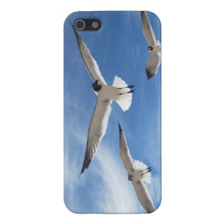seagulls covers for iPhone 5