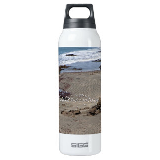 Seagulls feeding on the beach 16 oz insulated SIGG thermos water bottle