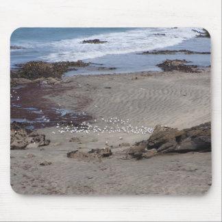 Seagulls Feeding On The Beach In Dunedin Mouse Pad