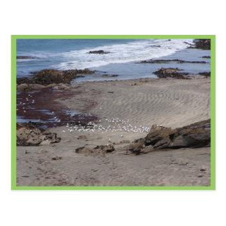 Seagulls Feeding On The Beach In Dunedin Postcard