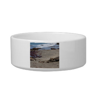 Seagulls feeding on the beach cat water bowl