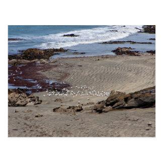 Seagulls feeding on the beach postcard