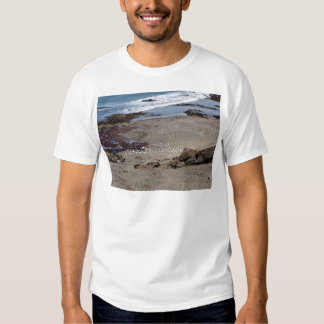 Seagulls feeding on the beach shirts
