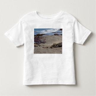 Seagulls feeding on the beach tshirts