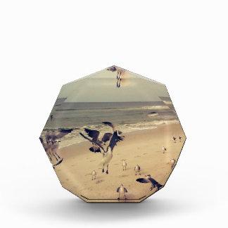 Seagulls flying on the beach award