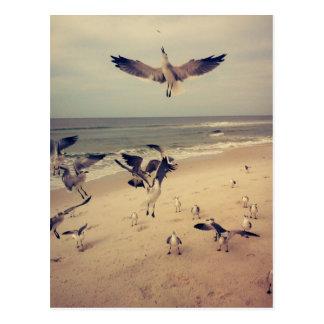 Seagulls flying on the beach postcard