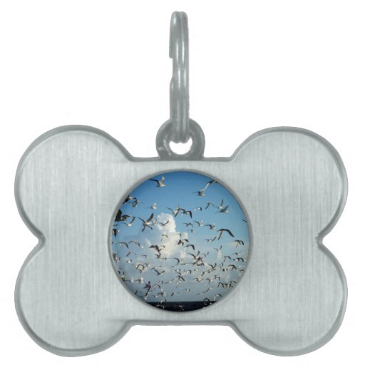 seagulls flying over beach pet ID tag