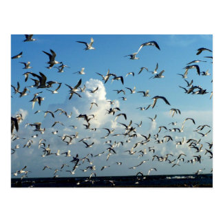 seagulls flying over beach postcard