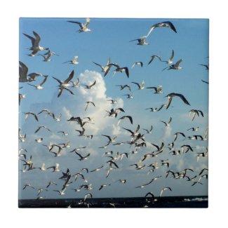 seagulls flying over beach tile