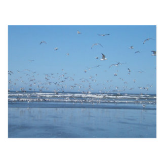 Seagulls flying over the ocean & shore postcard