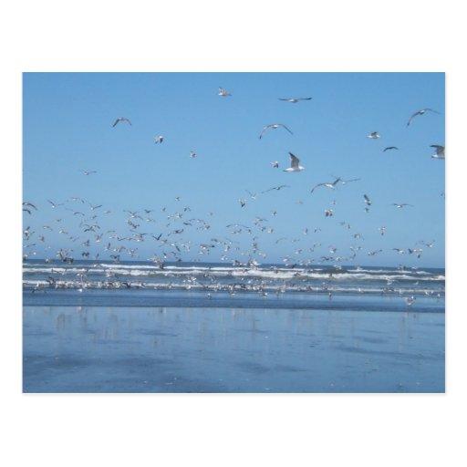 Seagulls flying over the ocean & shore postcard