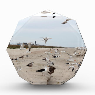 Seagulls Flying, Standing and Eating on the Beach Award