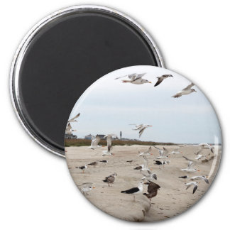 Seagulls Flying, Standing and Eating on the Beach Magnet