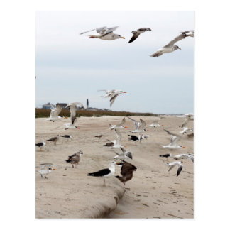 Seagulls Flying, Standing and Eating on the Beach Postcard