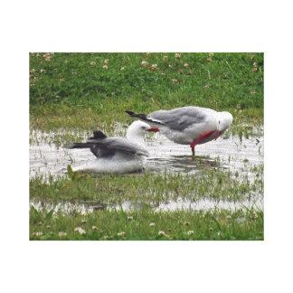 Seagulls Having a Bath Canvas Print