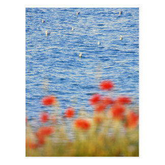 Seagulls' Heaven Postcard