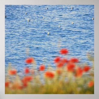 Seagulls' Heaven Poster