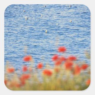 Seagulls' Heaven Square Sticker