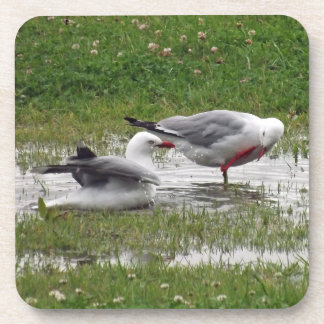 Seagulls in a Puddle Beverage Coaster