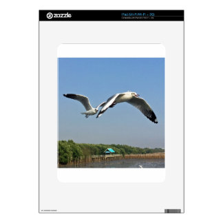 Seagulls in Flight Decals For The iPad