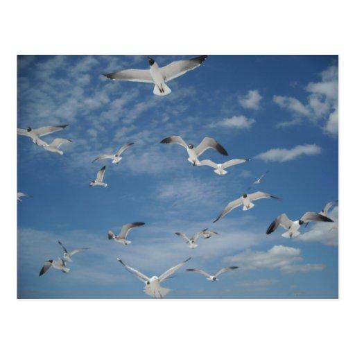 Seagulls in Flight Postcard