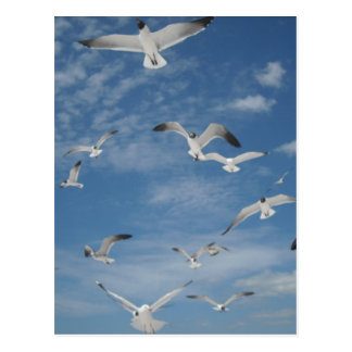 Seagulls in Flight Post Cards