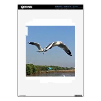 Seagulls in Flight Skins For iPad 3