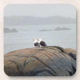 Seagulls in Kennebunkport, Maine Beverage Coaster