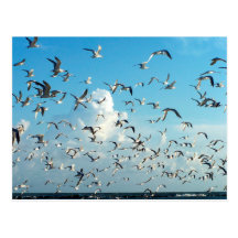 seagulls in sky over inlet birds postcard